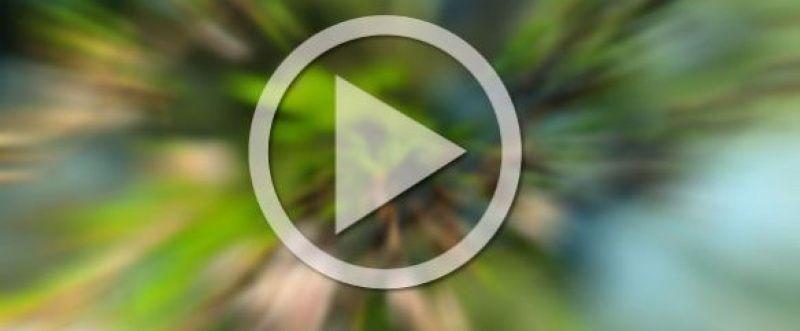 Qual a importância do vídeo mobile para sua estratégia de marketing